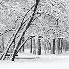 Snow in april by Oleksii Rybakov