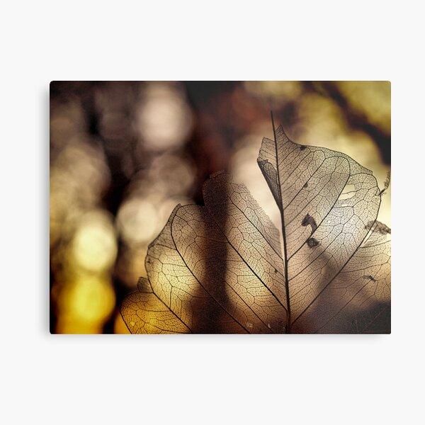 leaf at sunset Metal Print