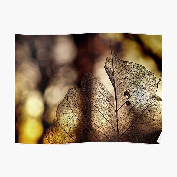 leaf at sunset Poster