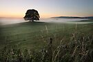 Airton Mist by SteveMG