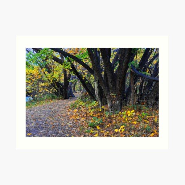 Autumn along the Arrow Art Print