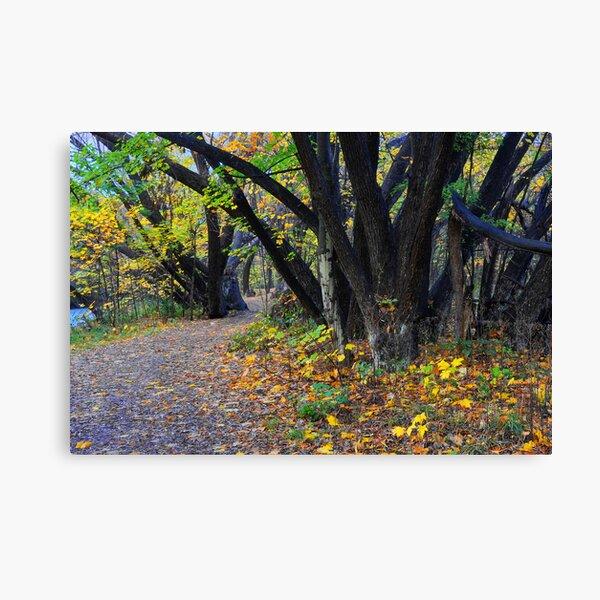 Autumn along the Arrow Canvas Print