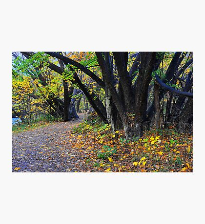 Autumn along the Arrow Photographic Print