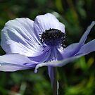 Blue Ballerina by Lozzar Flowers & Art