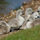 SIGNET HUDDLE  by RED-RABBIT