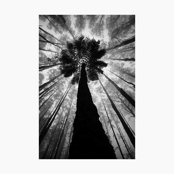 The Forest. Photographic Print