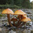 Roadside Fungi by Antonia Newall