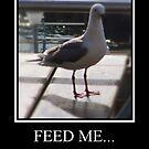 Feed me.... by Karlientjie