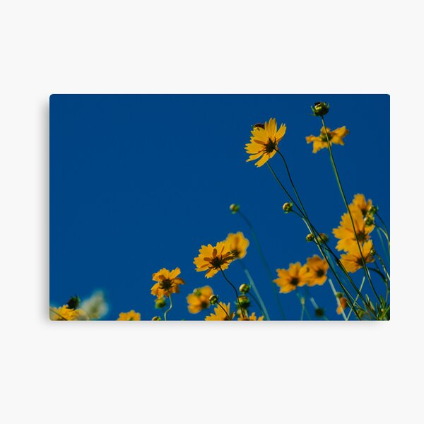 Soaking up Daylight Canvas Print