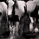 Wild Horses 1 by Hushabye Lifestyles