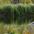 Wild Pond Grass by MaeBelle