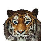 Bengal Tiger von Gino S