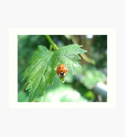 Ladybug, ladybug, do your thing... Art Print