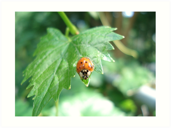 Ladybug, ladybug, do your thing... by May Lattanzio
