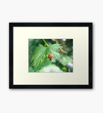 Ladybug, ladybug, do your thing... Framed Print