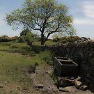 Rowallen Country Walk by Jonny Andrews