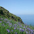 Bells Into Blue....Bossiney, North Cornwall. by greenstone