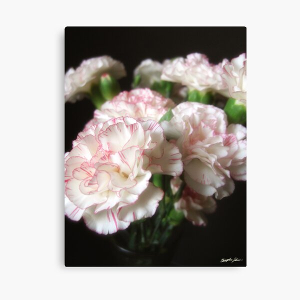 Almost White Carnations 5 Canvas Print