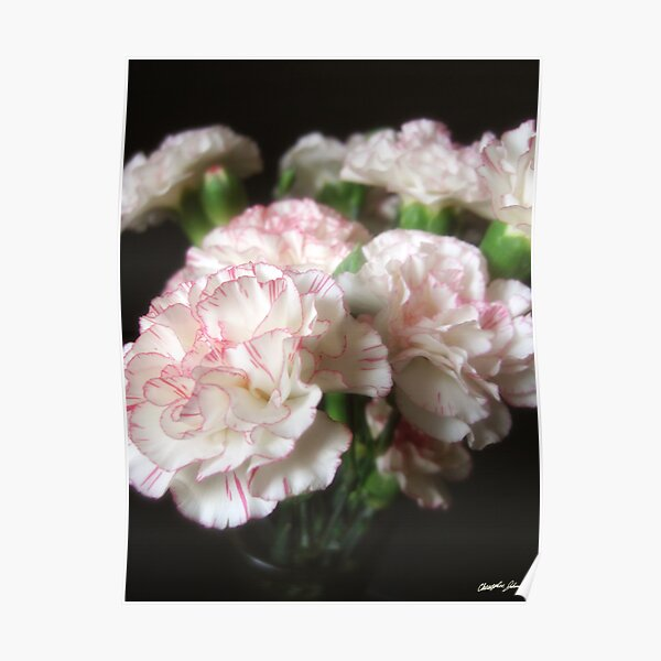 Almost White Carnations 5 Poster