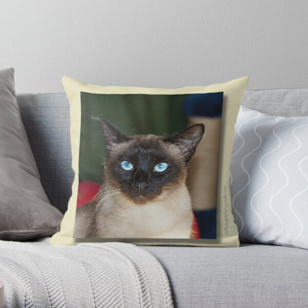 cat calendar image #5 Zafira Throw Pillow