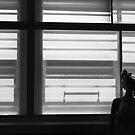 light and shade by Tony  Glover
