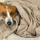 Cozy Little Pooch by Zoe Marlowe