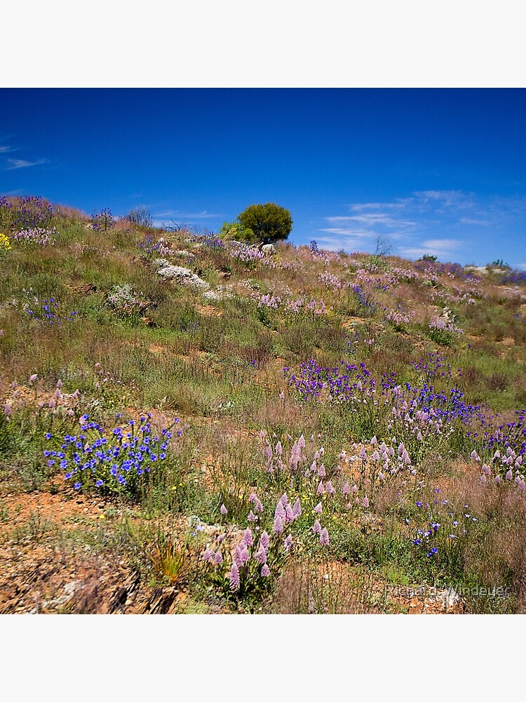 Hill of Flowers by RICHARDW