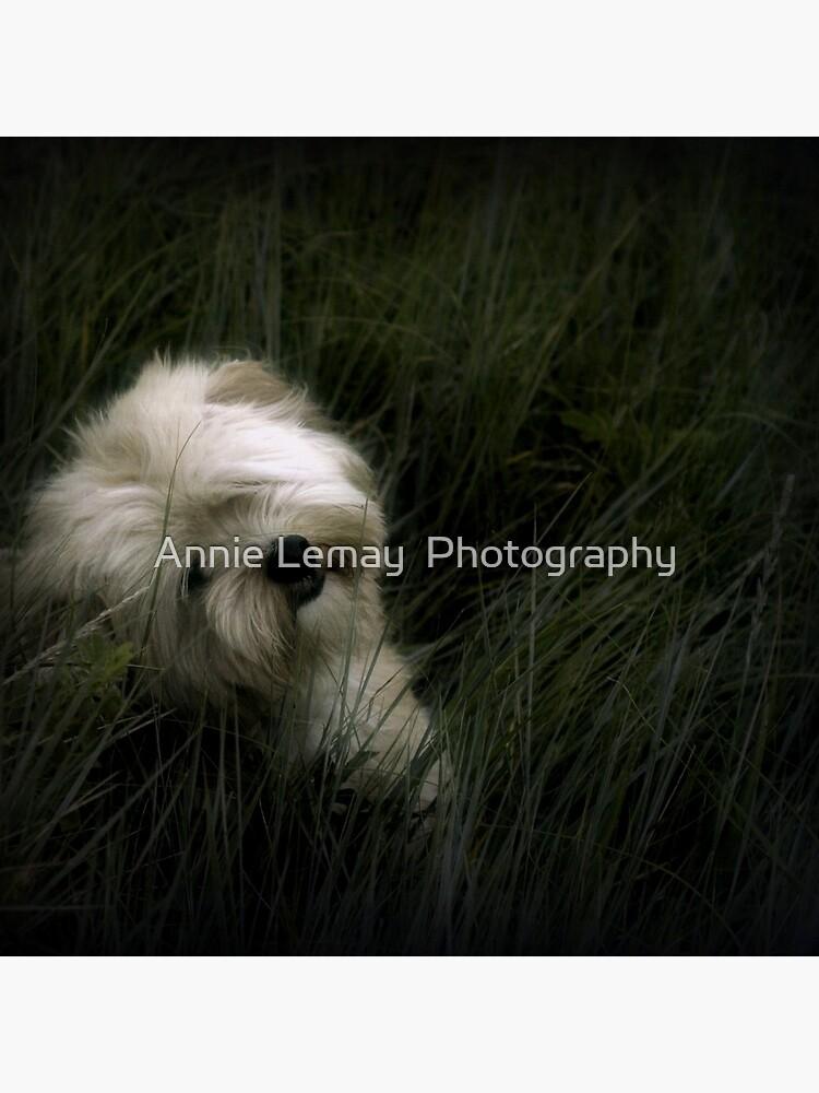 Happy Birthday Gizmo by ajlphotography