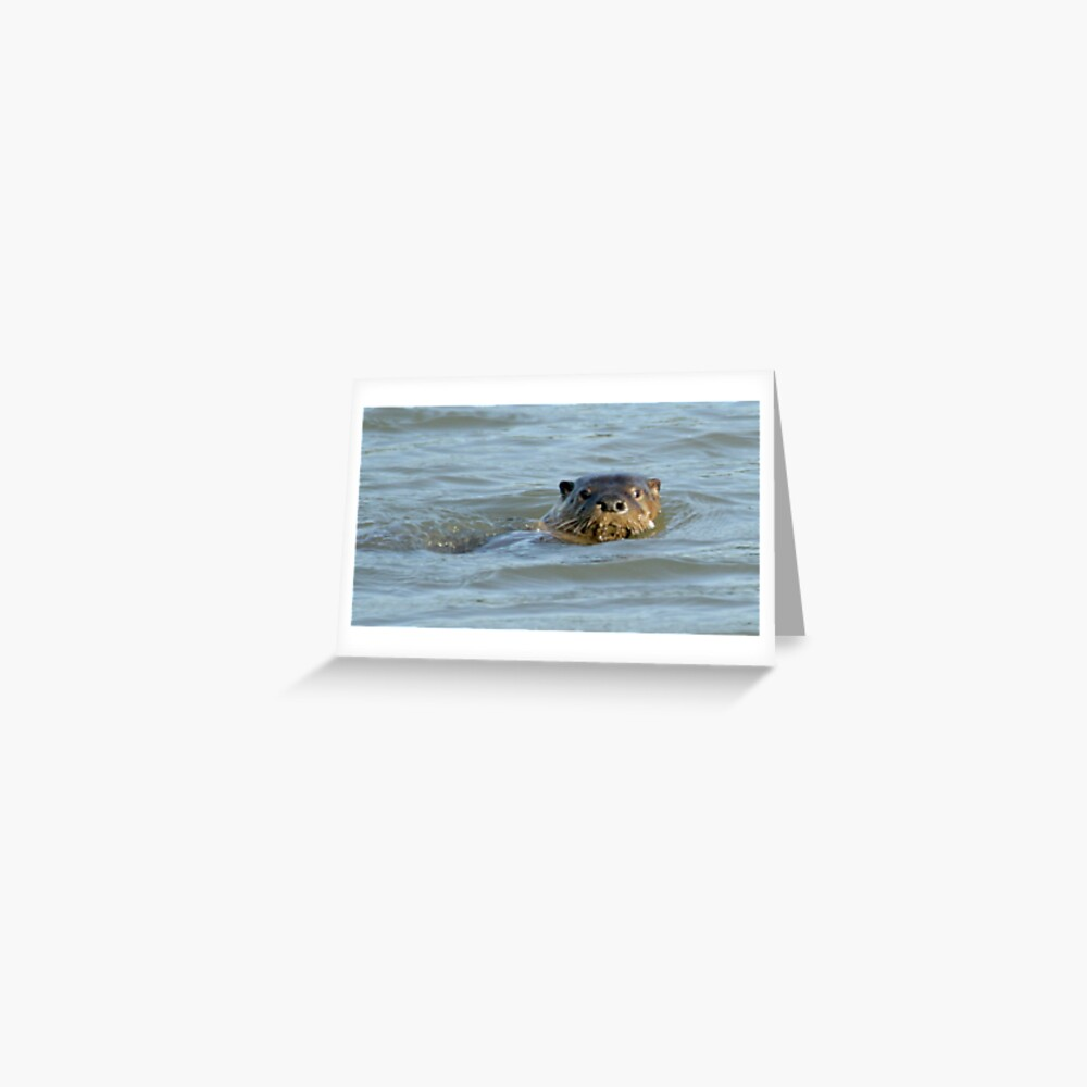Otter in the water Greeting Card