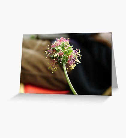 Komachi cluster Greeting Card