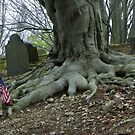 Old Roots by MaryinMaine