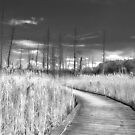 Into The Barrens_2 by sundawg7
