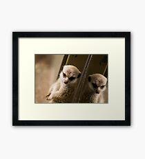 Meerkat Refection Framed Print