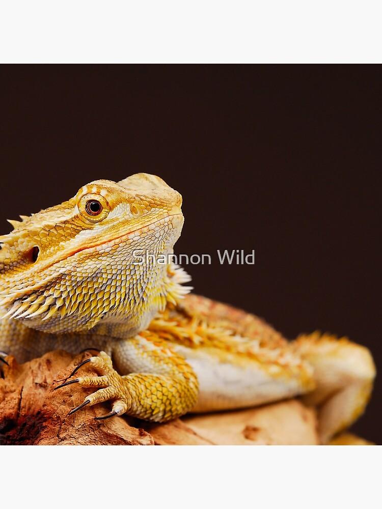 Central Bearded Dragon (Pogona vitticeps) by ShannonPlummer