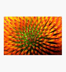 Nature's Candy Corn Photographic Print