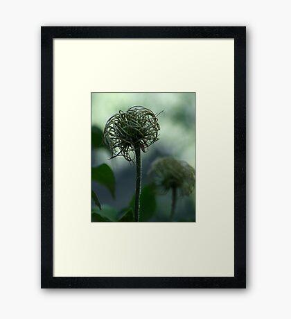 The Truffula Tree Framed Print