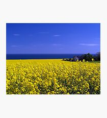 Hidden In The Rape Seed. Photographic Print