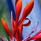 Cana Blossom by Jay Reed