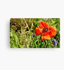Vibrant Poppy Canvas Print