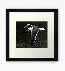 The Great Black Backed Gull Framed Print