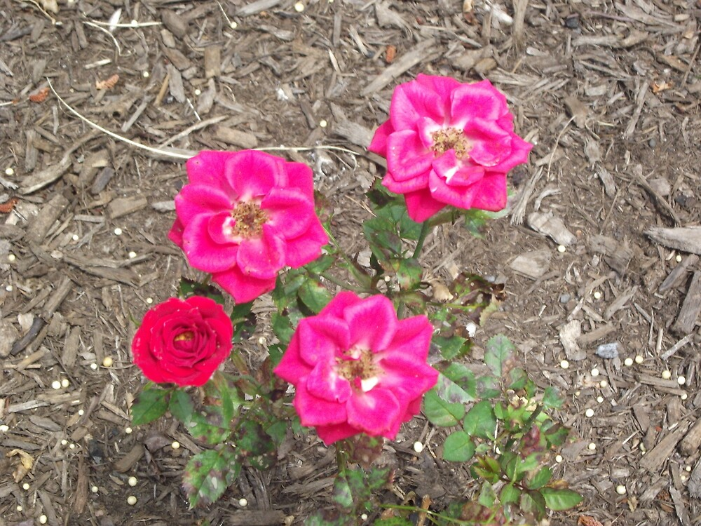 Flower outside my place II by Sinclere
