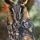 Long Eared Owl From Ahmerst Island by Gary Fairhead