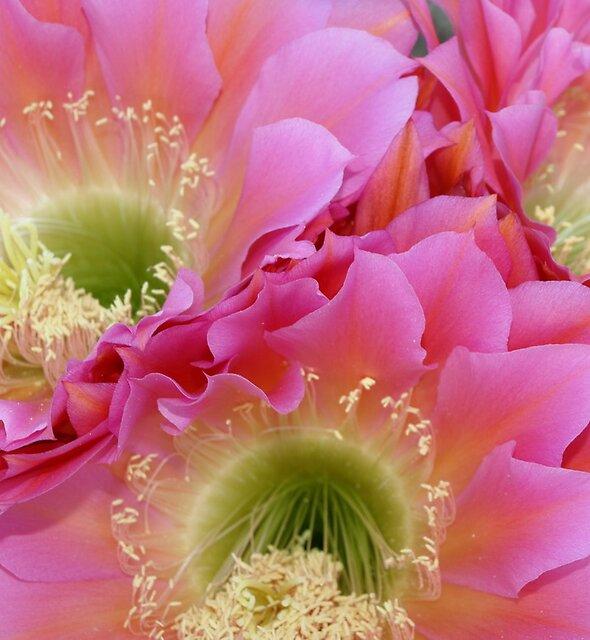 Neon Flowers in the Desert by B.L. Thorvilson