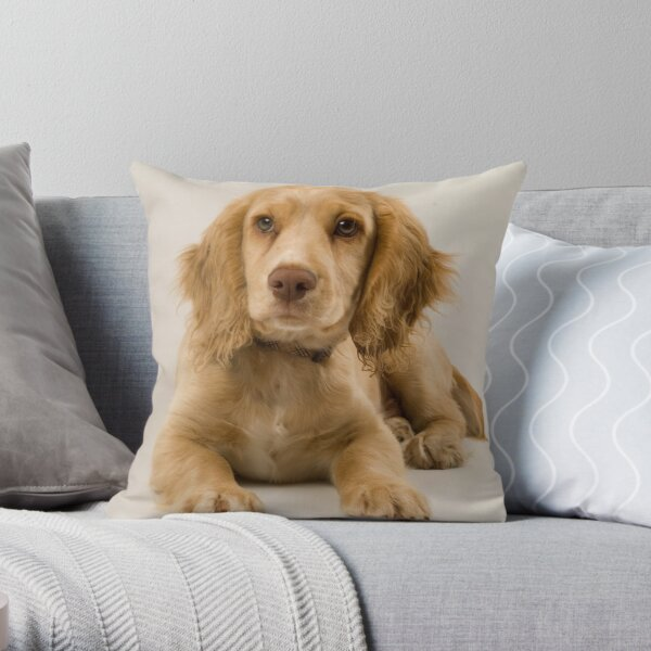 A Stuning Image of a Field Working Cocker Spaniel Pup Throw Pillow