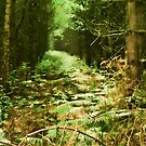 Sunlight in the Forest by Ann Garrett