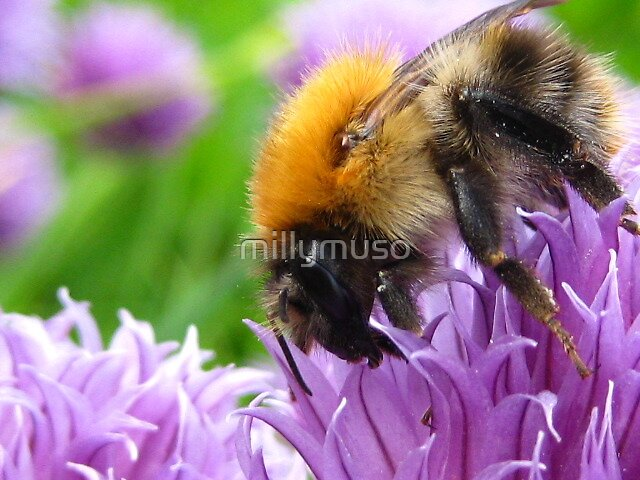 bumbley bee by millymuso