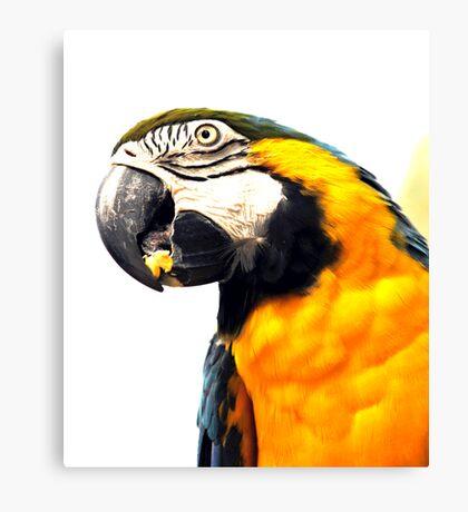 What's Up - Macaw parrot at birdworld Kuranda. Canvas Print