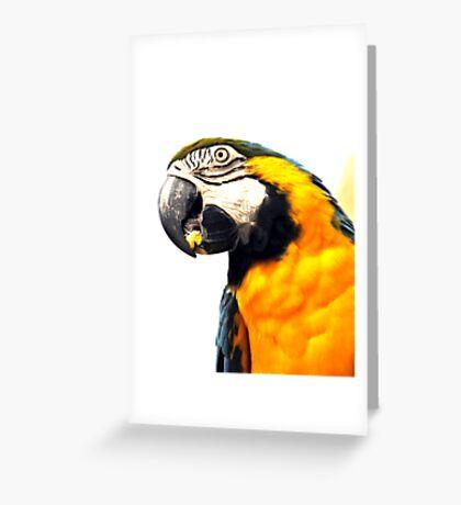 What's Up - Macaw parrot at birdworld Kuranda. Greeting Card