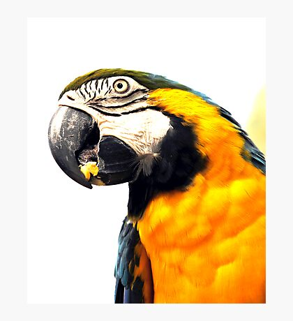 What's Up - Macaw parrot at birdworld Kuranda. Photographic Print