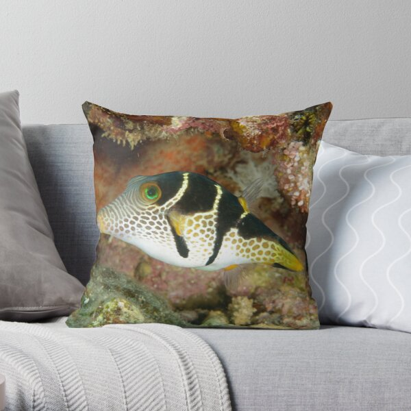 Clown toby - Canthigaster valentini Throw Pillow